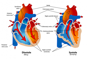 Herzpumpe